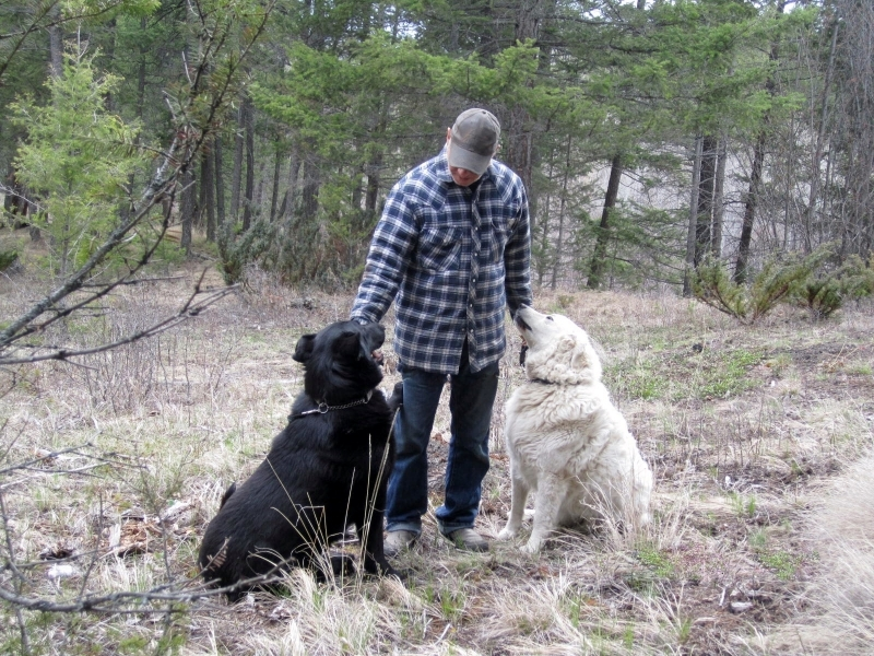 Gerry & LVG Dogs In Forest