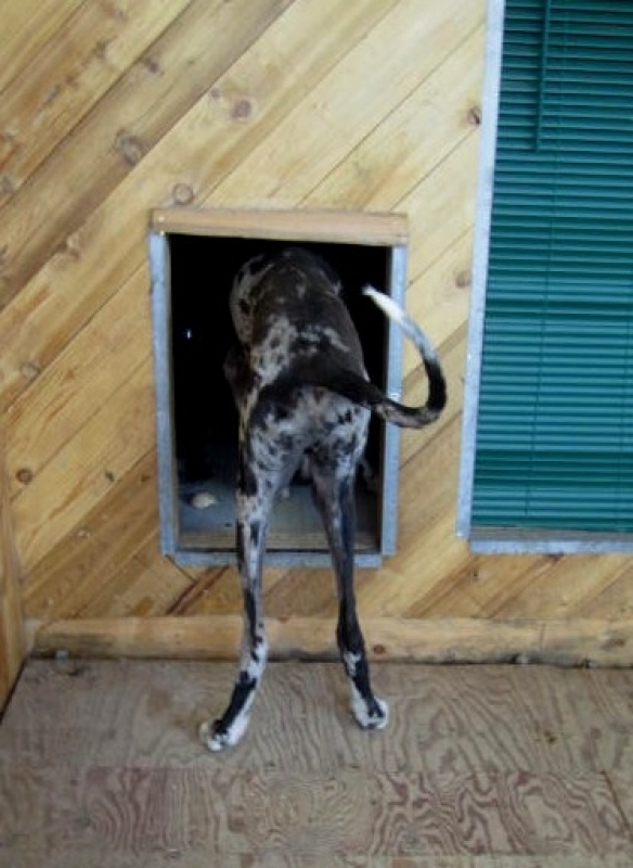Dog entering kennel