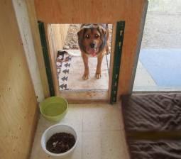 Dog outside of kennel